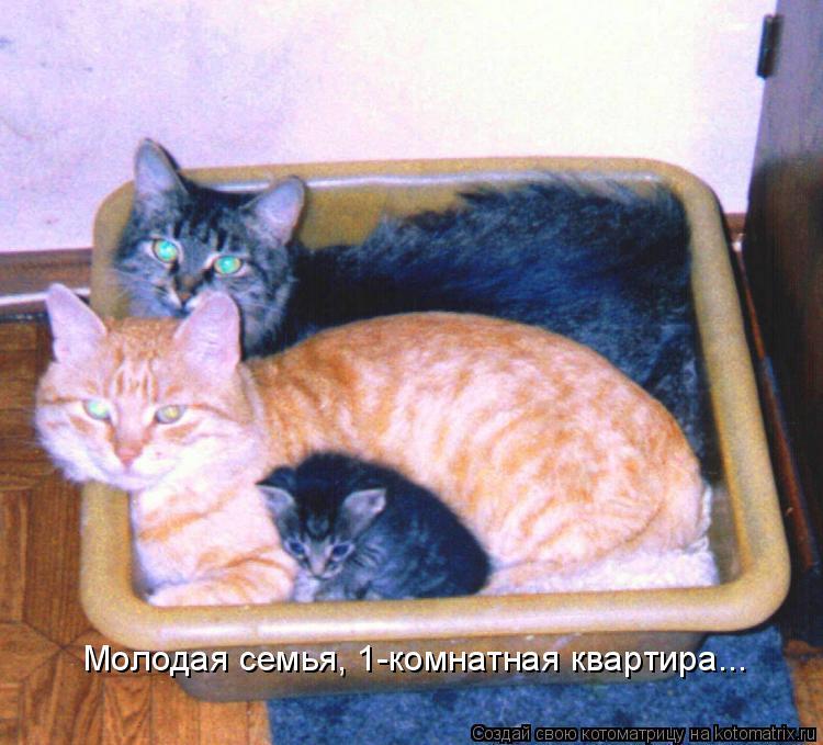 Котоматрица: Молодая семья, 1-комнатная квартира...
