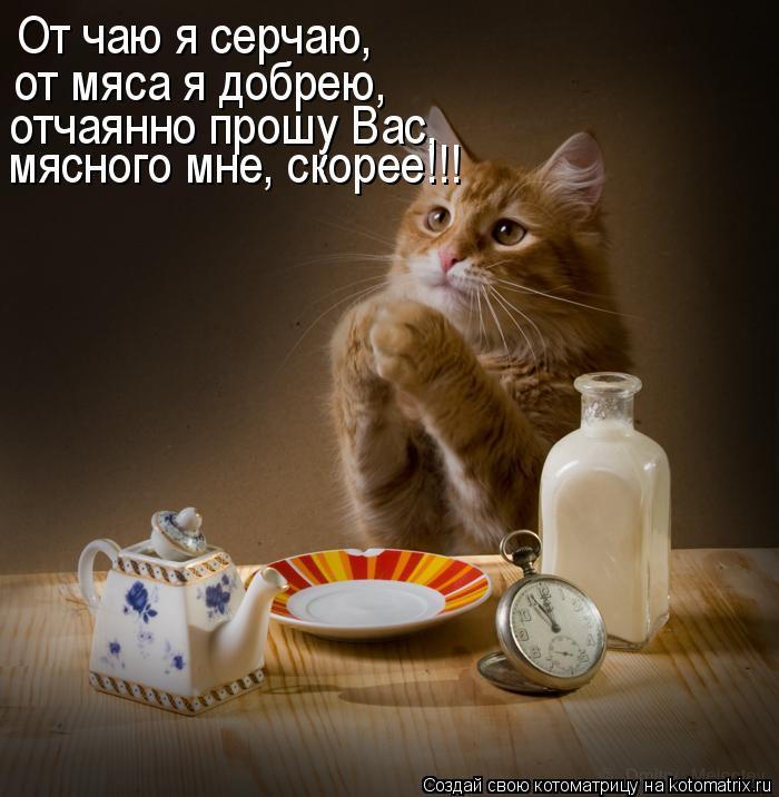 Котоматрица: От чаю я серчаю,  от мяса я добрею,  отчаянно прошу Вас,  мясного мне, скорее!!!