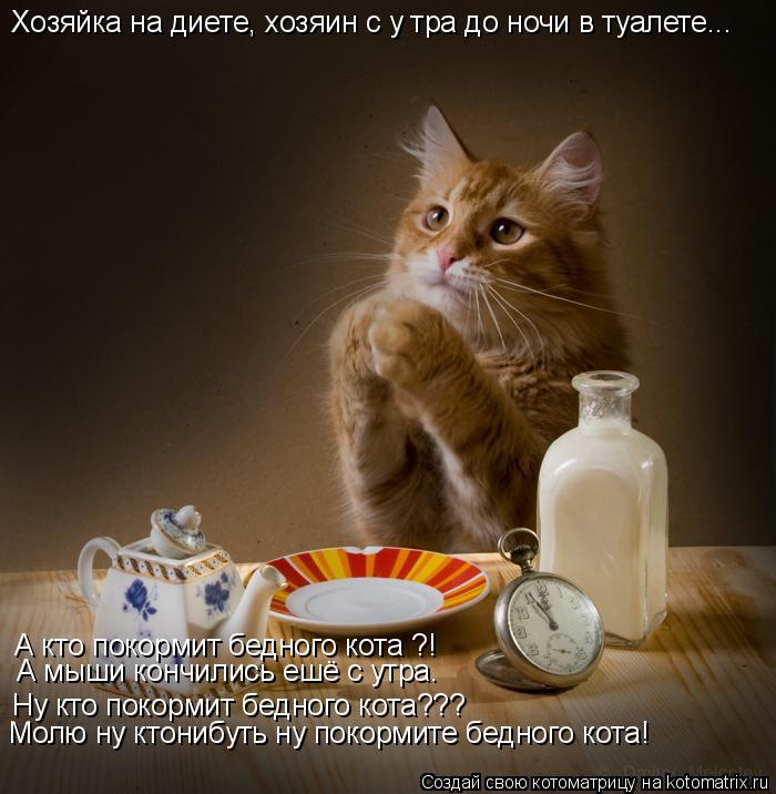 Котоматрица: Хозяйка на диете, хозяин с у тра до ночи в туалете... А кто покормит бедного кота ?! Ну кто покормит бедного кота??? Молю ну ктонибуть ну покорми