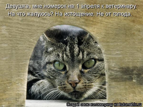 Котоматрица: Девушка, мне номерок на 1 апреля к ветеринару. На что жалуюсь? На истощение. Не от голода.