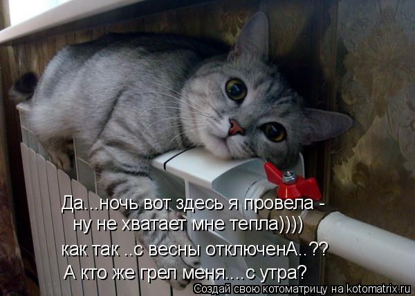 Котоматрица: Да...ночь вот здесь я провела - ну не хватает мне тепла)))) как так ..с весны отключенА..?? А кто же грел меня....с утра?