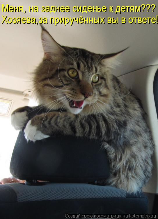 Котоматрица: Меня, на заднее сиденье к детям???  Хозяева,за приручённых вы в ответе!!!