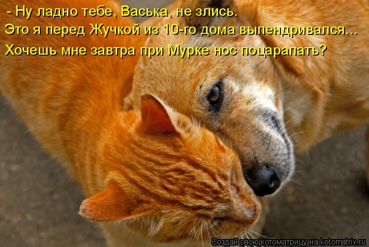 Котоматрица: - Ну ладно тебе, Васька, не злись. Это я перед Жучкой из 10-го дома выпендривался... Хочешь мне завтра при Мурке нос поцарапать?