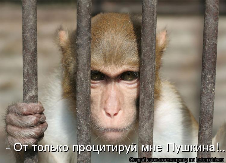 Котоматрица: - От только процитируй мне Пушкина!..