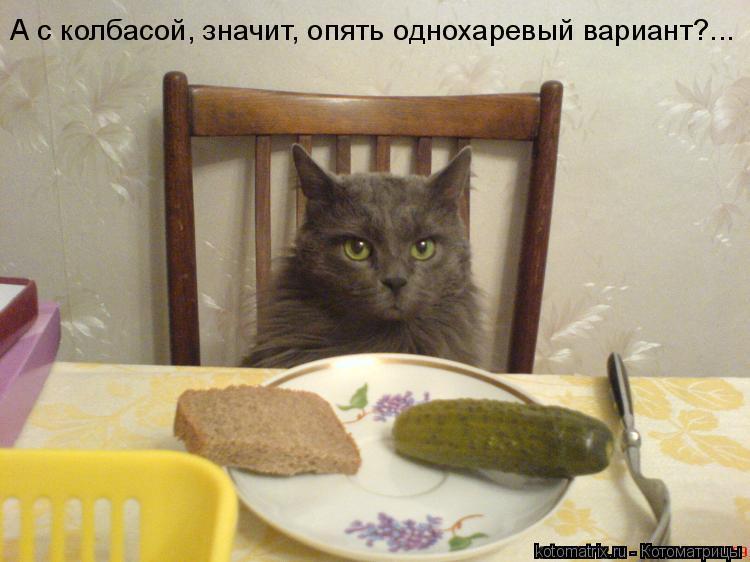 Котоматрица: А с колбасой, значит, опять однохаревый вариант?...