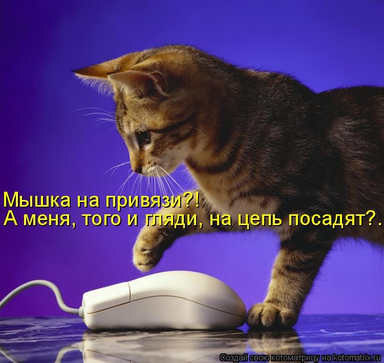Мышка на привязи?!  А меня, того и гляди, на цепь посадят?...