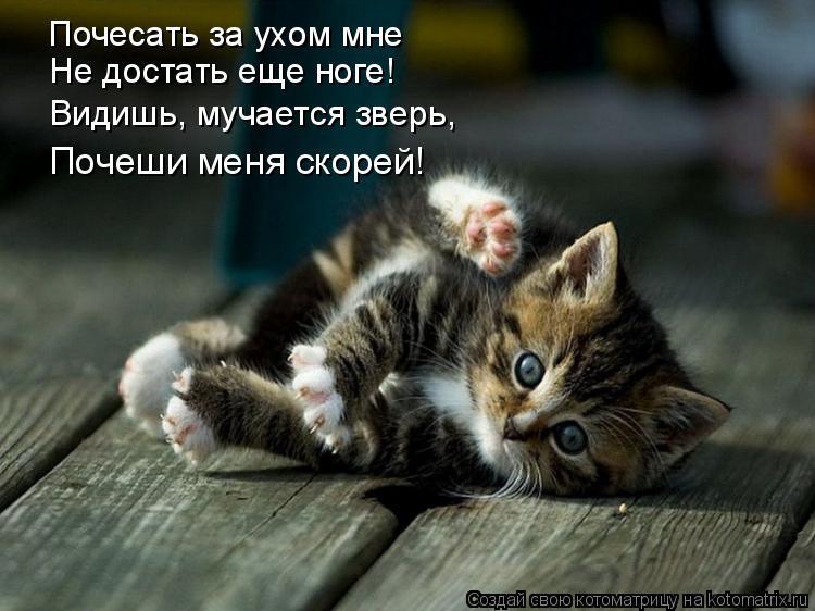 Котоматрица: Почесать за ухом мне Не достать еще ноге! Видишь, мучается зверь, Почеши меня скорей!