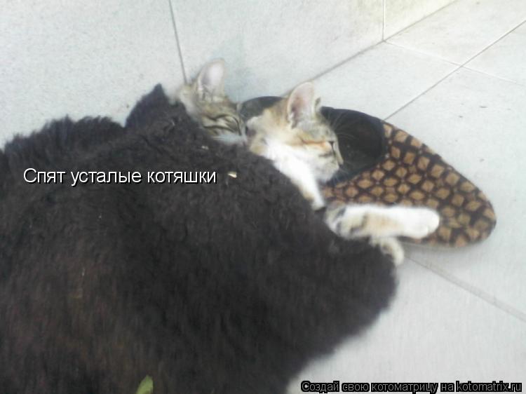 Котоматрица: Спят усталые котяшки