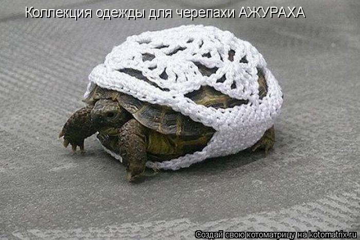 Котоматрица: Коллекция одежды для черепахи АЖУРАХА