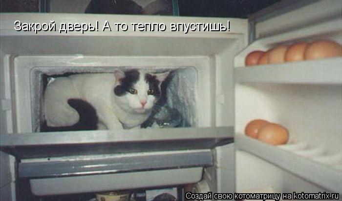 Котоматрица: Закрой дверь! А то тепло впустишь!