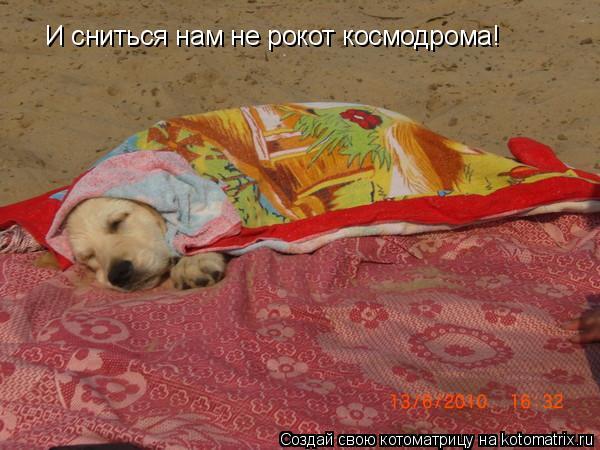Котоматрица: И сниться нам не рокот космодрома!