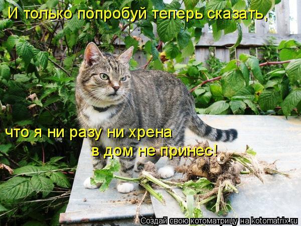Котоматрица: И только попробуй теперь сказать, что я ни разу ни хрена  в дом не принес!