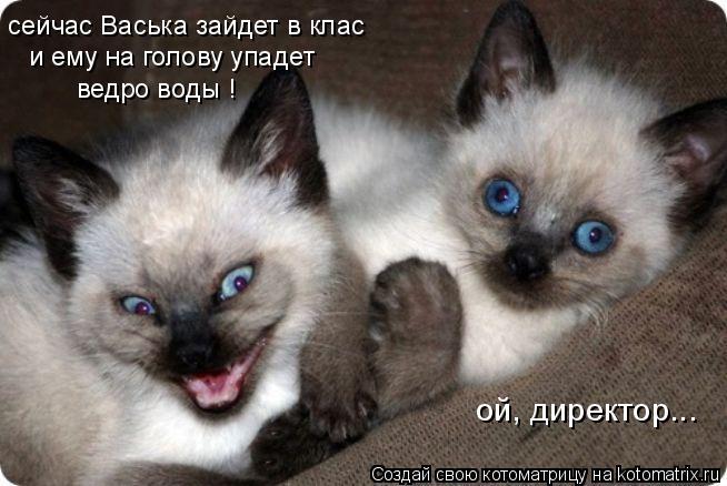 Котоматрица: сейчас Васька зайдет в клас и ему на голову упадет ведро воды ! ой, директор...