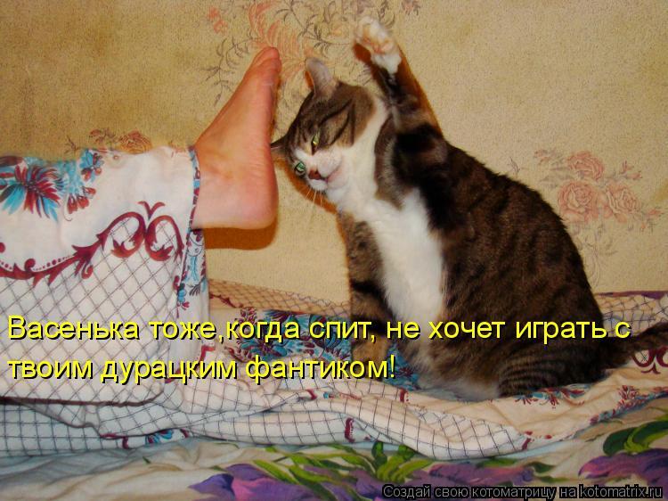Котоматрица: Васенька тоже,когда спит, не хочет играть с твоим дурацким фантиком!