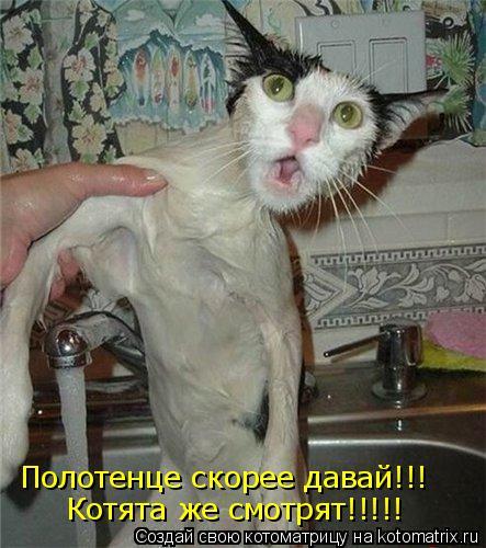 Полотенце скорее давай!!! Котята же смотрят!!!!!