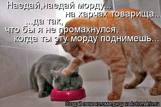 Котоматрица: Наедай,наедай морду... на харчах товарища... ...да так, что бы я не промахнулся, когда ты эту морду поднимешь...