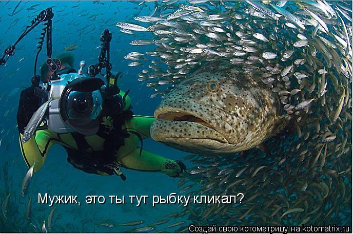 Котоматрица: Мужик, это ты тут рыбку кликал?