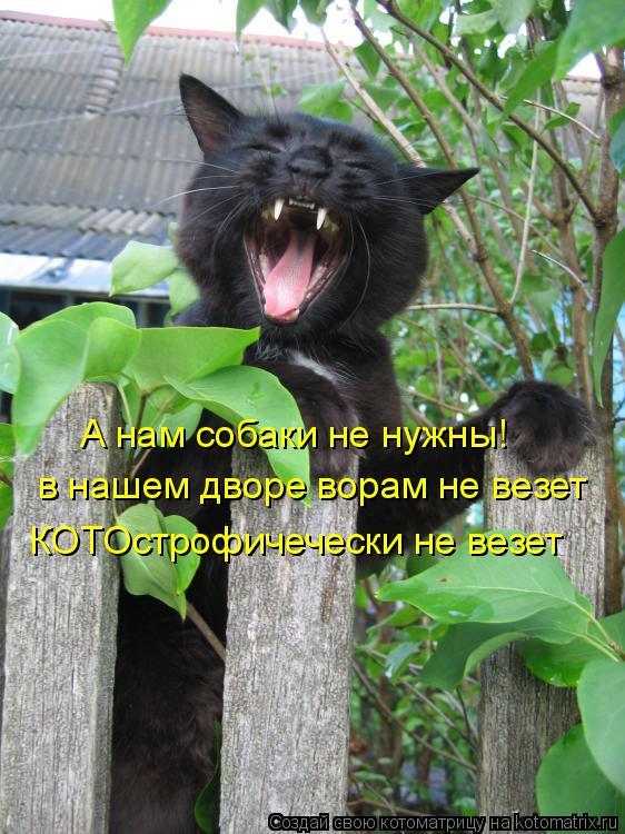 Котоматрица: А нам собаки не нужны! в нашем дворе ворам не везет КОТОстрофичечески не везет