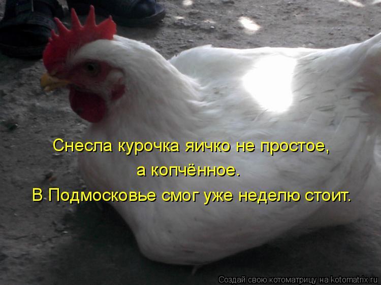 Котоматрица: Снесла курочка яичко не простое, а копчённое. В Подмосковье смог уже неделю стоит.