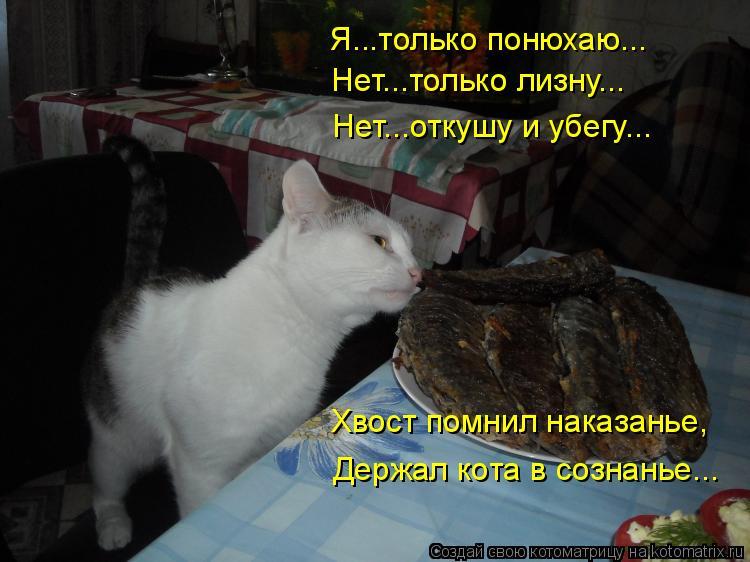 Котоматрица: Я...только понюхаю... Нет...только лизну... Нет...откушу и убегу... Хвост помнил наказанье, Держал кота в сознанье...