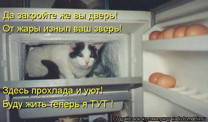 Котоматрица: Да закройте же вы дверь! От жары изныл ваш зверь! Здесь прохлада и уют! Буду жить теперь я ТУТ !