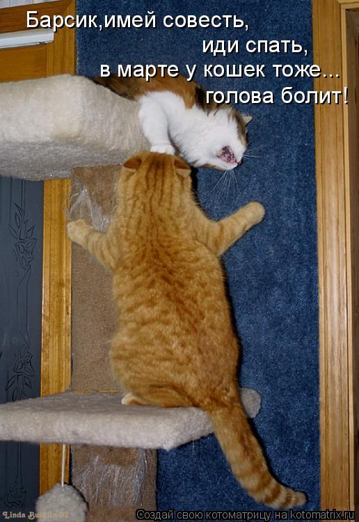 Котоматрица: Барсик,имей совесть, иди спать, в марте у кошек тоже...  голова болит!