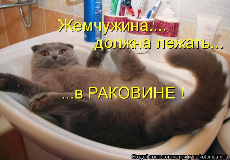 Котоматрица: Жемчужина.... должна лежать... ...в РАКОВИНЕ !