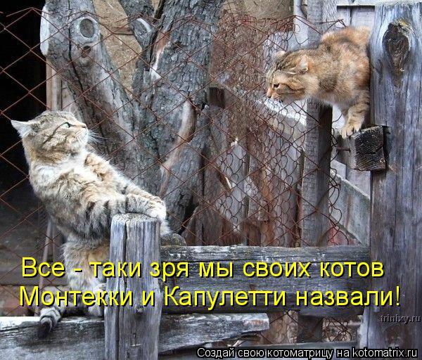 Котоматрица: Все - таки зря мы своих котов Монтекки и Капулетти назвали!