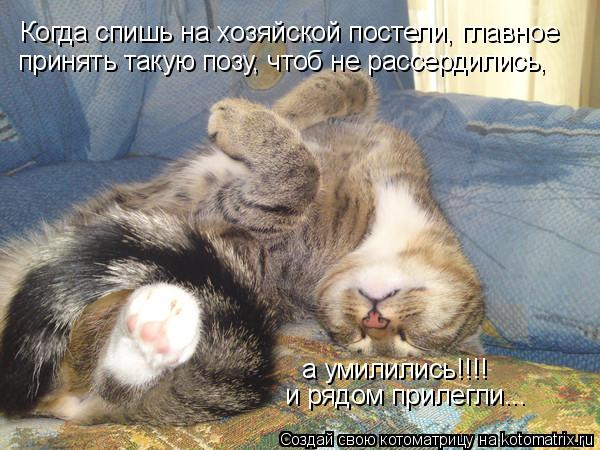 Котоматрица: Когда спишь на хозяйской постели, главное принять такую позу, чтоб не рассердились, а умилились!!!! и рядом прилегли...