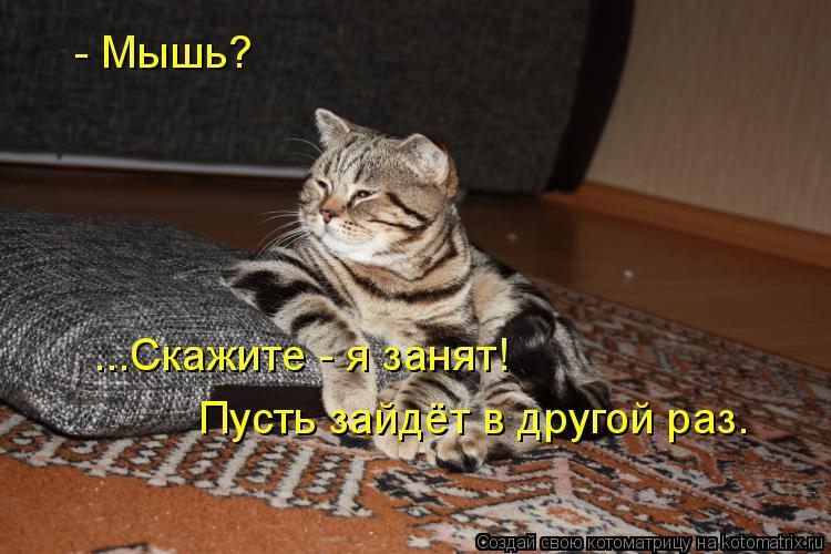 Котоматрица: - Мышь? ...Скажите - я занят! Пусть зайдёт в другой раз.