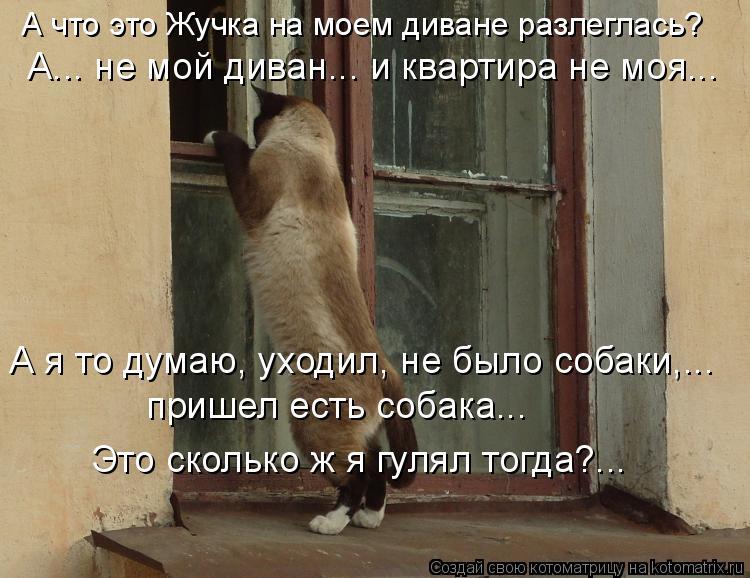 Котоматрица: А что это Жучка на моем диване разлеглась?  Это сколько ж я гулял тогда?... пришел есть собака...  А я то думаю, уходил, не было собаки,...   А... не