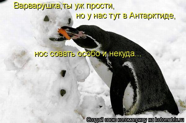 Котоматрица: Варварушка,ты уж прости, но у нас тут в Антарктиде, нос совать особо и некуда...