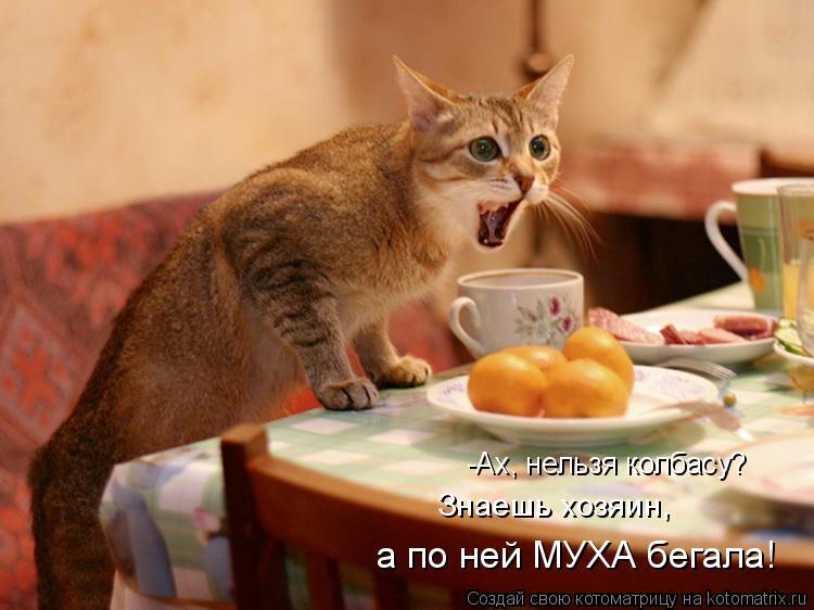 Котоматрица: -Ах, нельзя колбасу? Знаешь хозяин,  а по ней МУХА бегала!
