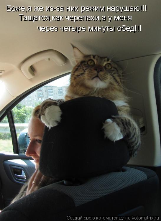 Котоматрица: Боже,я же из-за них режим нарушаю!!! Тащатся,как черепахи,а у меня  через четыре минуты обед!!!