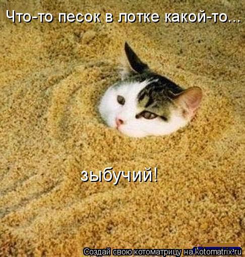 Котоматрица: Что-то песок в лотке какой-то...  зыбучий!
