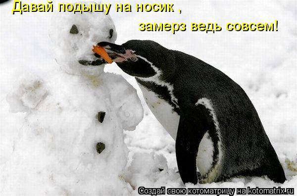 Котоматрица: Давай подышу на носик , замерз ведь совсем!
