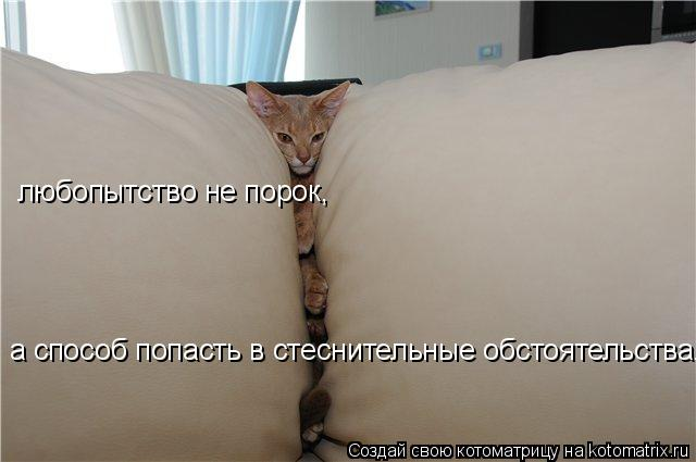Котоматрица: любопытство не порок, а способ попасть в стеснительные обстоятельства...