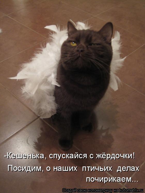 Котоматрица: -Кешенька, спускайся с жёрдочки! Посидим, о наших  птичьих  делах почирикаем...