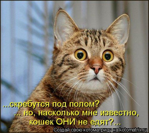 Котоматрица: ...скребутся под полом? ... но, насколько мне известно, кошек ОНИ не едят?...