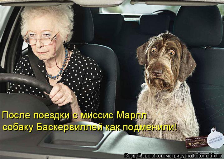 Котоматрица: После поездки с миссис Марпл собаку Баскервиллей как подменили!