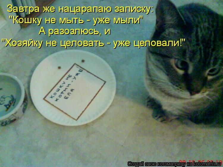 """Котоматрица: Завтра же нацарапаю записку: """"Кошку не мыть - уже мыли"""" А разозлюсь, и """"Хозяйку не целовать - уже целовали!"""""""