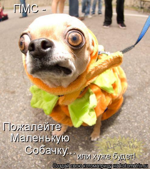 Котоматрица: ПМС - Пожалейте  Маленькую Собачку... или хуже будет!