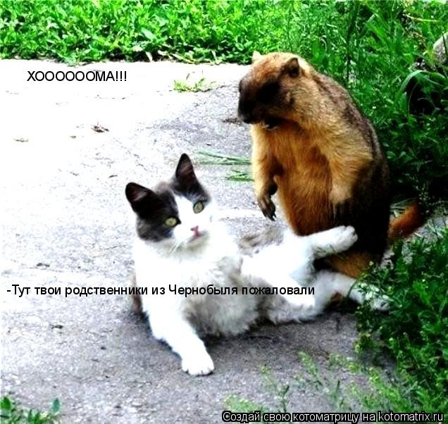 Котоматрица: ХООООООМА!!!  -Тут твои родственники из Чернобыля пожаловали