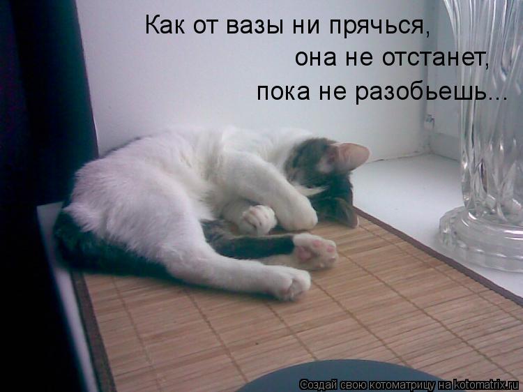 Котоматрица: Как от вазы ни прячься, она не отстанет, пока не разобьешь...