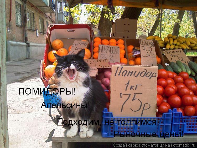 Котоматрица: ПОМИДОРЫ! Апельсины! Подходим, не толпимся! Рыночные цены!