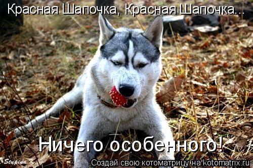 Котоматрица: Красная Шапочка, Красная Шапочка... Ничего особенного!