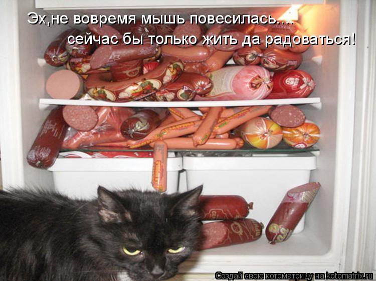 Котоматрица: Эх,не вовремя мышь повесилась.... сейчас бы только жить да радоваться!