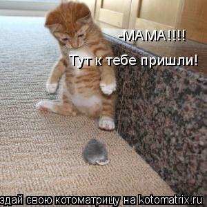 Котоматрица: -МАМА!!!! Тут к тебе пришли!