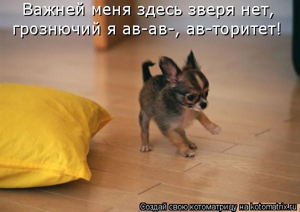 Котоматрица: Важней меня здесь зверя нет,  грознючий я ав-ав-, ав-торитет!