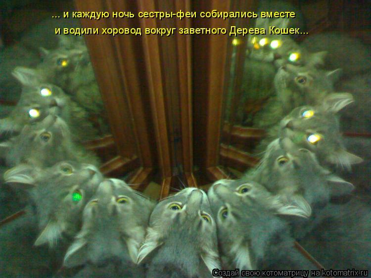 Котоматрица: ... и каждую ночь сестры-феи собирались вместе и водили хоровод вокруг заветного Дерева Кошек...
